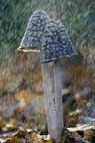 Fungo in pioggia fotografie stock