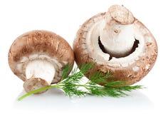 Fungo prataiolo fresco del fungo con l'aneto del ramoscello Fotografia Stock