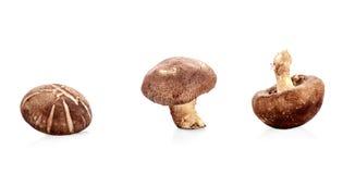 Fungo prataiolo fresco del fungo isolato su fondo bianco Fotografie Stock