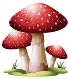 Fungo rosso Fotografia Stock Libera da Diritti