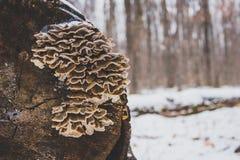 Fungo su una connessione una foresta Fotografie Stock