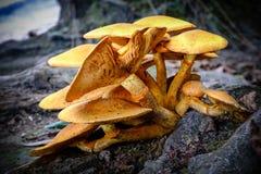 Fungo sul pavimento della foresta closeup Fotografie Stock