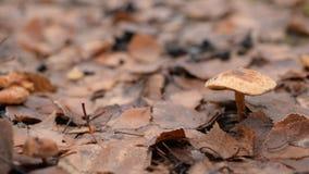 Fungo in una foresta in autunno video d archivio