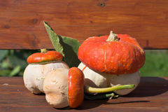 Fungoid pumpkin Royalty Free Stock Photo