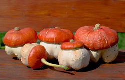 Fungoid pumpkin Stock Image