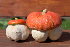 Fungoid pumpkin Stock Photography