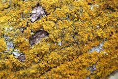 Fungos da árvore Fotos de Stock Royalty Free