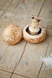 Fungos de cogumelo Imagem de Stock