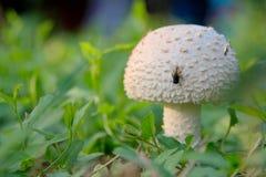 Fungos e mosca Fotos de Stock