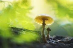 Fungos em um tronco imagens de stock royalty free