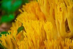 Fungos que crescem no assoalho da floresta Fotografia de Stock Royalty Free
