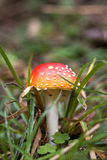 Fungus Stock Images