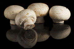 Fungus. Some mushrooms on a black background with reflection stock photography