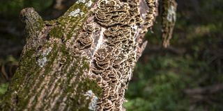 Fungus and algae on the bark of a tree royalty free stock photography