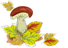 Fungus and autumn leaves Stock Photo