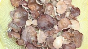 Fungus. The fungus in the basket stock footage