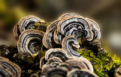 Fungus. Close up fungus grow around a old tree trunk Stock Image