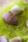 Fungus Royalty Free Stock Images