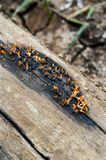 Fungus on dry wood. Close up fungus on dry wood royalty free stock photography