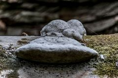 Fungus on a fallen tree trunk. Moss and blurred background stock image