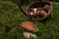 Fungus Royalty Free Stock Photos