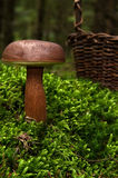 Fungus Stock Photography
