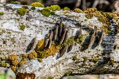 Fungus. Fungus grow around a old fallen tree trunk. Close-up view stock photos