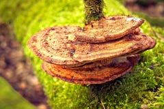 Fungus growing on moss covered bark