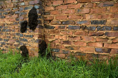 Fungus-growing termite nest on a brick wall. Large fungus growing Macrotermes natalensis termite net on a residential brick wall stock image