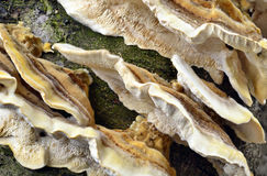 Fungus growing on a tree Stock Photo