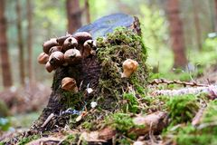 Fungus growing on a tree in the wood stock photo
