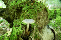 Fungus grows on tree Stock Image