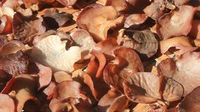 Fungus grows on trees. The fungus grows on trees stock footage
