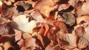 Fungus grows on trees. The fungus grows on trees stock video