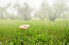 Fungus in lawn Stock Image