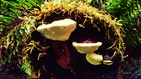 Fungus. On a log Royalty Free Stock Photo