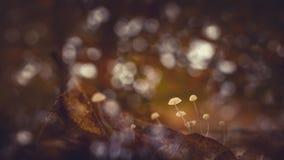 Fungus, Macro, Mushrooms Royalty Free Stock Photo