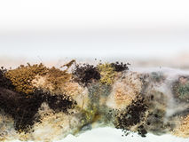 Fungus and mold on sliced bread Stock Image