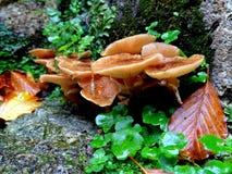 Fungus, Mushroom, Medicinal Mushroom, Edible Mushroom stock image