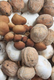 Fungus and nuts. Fungus and fresh nuts of Sorrento royalty free stock images