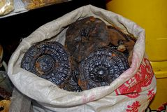 Fungus at Qinping Market, Guangzhou, China Stock Photo