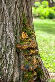 Fungus on the tree stock photography