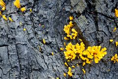 Fungus on tree Royalty Free Stock Photos