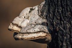 Fungus on tree Stock Photo