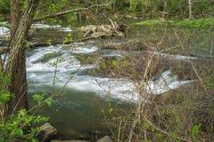 Funileiro Creek Trout Stream imagem de stock royalty free