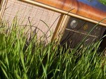 Funk im grünen Gras Stockfotografie