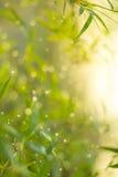 Funkelnde Lichter verwischten natürliches bokeh Lizenzfreie Stockfotos