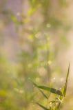 Funkelnde Lichter Weinlese unscharfes natürliches bokeh Lizenzfreies Stockfoto