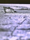 funkelnde Scherben des gebrochenen Eises stehen heraus auf dem gefrorenen See hervor Der Lichteffekt tritt auf Lizenzfreie Stockfotos