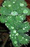 Funkelnde waterdrops Stockfotos